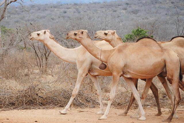 tax preparer camels