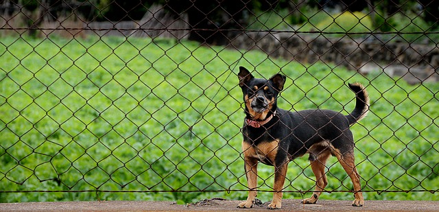 tax preparer guard dog